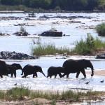 Elephants of Kruger