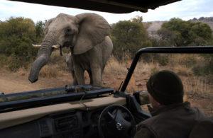blog-elephant